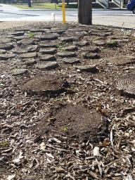 Devolution of Grounds
